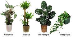 10 φυτά εσωτερικού χώρου ανθεκτικά και ιδανικά για διακόσμηση Cactus Plants, Room Decor, Flowers, Bedroom Ideas, Gardening, Interiors, Shop, Photography, House