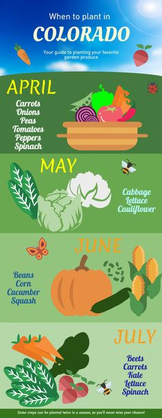 Colorado Planting Calendar: When to Start Digging [Infographic] - Century Communities Aspen Colorado, Colorado Springs, Denver Colorado, Colorado Homes, When To Plant Vegetables, Growing Veggies, Winter Vegetables, Spring Garden, Winter Garden