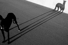 Magical Art of Shadow Photography -- 19 Magical Art of Shadow Photography Shadow Photography, Dog Photography, Street Photography, Fantasy Photography, Vintage Photography, Henri Cartier Bresson, Shadow Play, Shadow Art, Light And Shadow