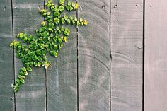 #abstract #color #decoration #design #fence #green #leaves #pattern #texture #vines #wall #wood #wooden #wooden fence