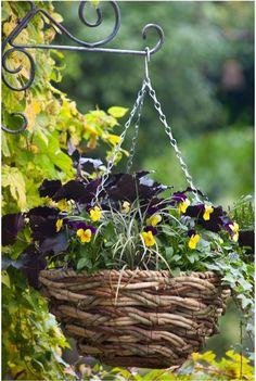 hanging basket image