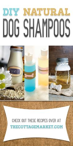 DIY Natural Dog Shampoos - The Cottage Market #DogShampoo, #DogShampooRecipes, #DIYNaturalDogShampoos