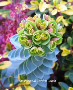 The Interesting & Unusual Succulent Plants | Botanic Art