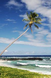 Palm tree on a Samoan beach