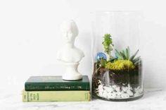 terrarium pas cher et plante verte