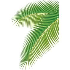 Set of green palm leaves vector Free vector in Adobe Illustrator ai (... ❤ liked on Polyvore featuring flowers and backgrounds