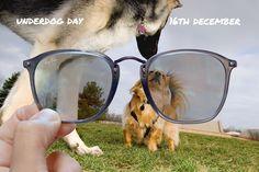 Underdog Day // Dece