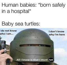 Crazy Funny Memes, Funny Animal Memes, Really Funny Memes, Stupid Funny Memes, Wtf Funny, Funny Relatable Memes, Funny Posts, Funny Quotes, Funny Stuff