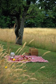 Image detail for -Picnic Setting