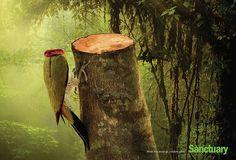 Efectos espantosos de la deforestación expuestos en brutales anuncios - Planeta Curioso