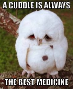 Here is todays cute animal overload Awesomely Cute, Cute Kittens, Cute Puppies, Cute Animals, Cute Babies and Cute Things in General Animal Captions, Funny Animal Memes, Funny Animals, Funny Quotes, Funny Memes, Funniest Animals, Hilarious, Funny Birds, Cute Memes