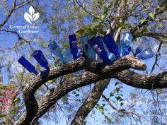 best bottle tree ever austin texas #centraltexasgardener Central Texas Gardener