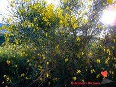 #Spring #On #Stromboli