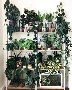 Indoor Vertical Gardening Tips and Ideas Organic gardening isn't always about food to eat. Some people enjoy growing flowers and other forms of plant life as well. You can grow anything bereft of harmful chemicals as long as you're d Room With Plants, House Plants Decor, Plant Decor, Big Plants, Indoor Garden, Garden Plants, Indoor Plant Wall, Fence Garden, Plant Aesthetic