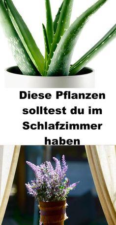 Growing Aloe Vera, Bedroom Plants, Flower Aesthetic, Flower Wallpaper, Home Hacks, Air Plants, Gardening Tips, Body Care, Planting Flowers