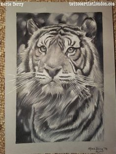 Tiger Portrait Drawing | London based Tattoo Artist - Marie TerryLondon based Tattoo Artist – Marie Terry