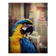 Bird In The City Poster  $24.95  by photoshopper  - cyo diy customize personalize unique