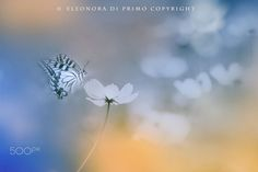 Every heart has its own light. by Eleonora Di Primo on 500px
