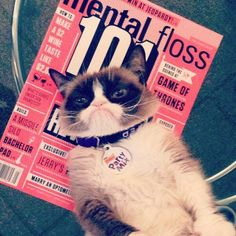 For her birthday (April 4, 2014), @Grumpy Cat (Official) visited @Mental Floss Magazine headquarters. And what a time she had! pic.twitter.com/i6RP6xiY8V #GrumpyCat