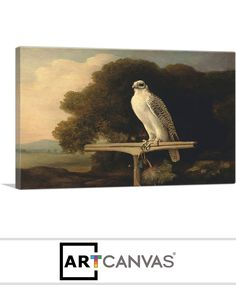 Ready-to-hang Greenland Falcon 1780 Canvas Art Print for Sale canvas art print for sale. Free hanging accessories and insurance. Art Prints For Sale, Canvas Art Prints, Painting, Painting Art, Paintings, Painted Canvas, Drawings