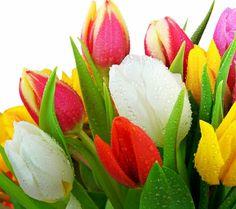 Buatyful flower