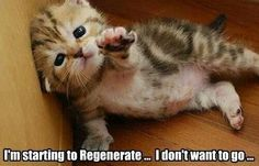 Not even cute kittens are safe from zombies! Adorable Cute Animals, Cute Baby Animals, Funny Animals, Animal Funnies, Cute Animals With Funny Captions, Animal Captions, Funniest Animals, Animal Babies, Cute Kittens