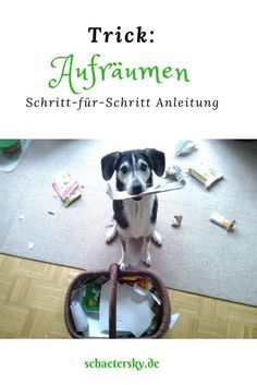 Lustige Beschäftigung im Haus: So lernt dein Hund den Trick, sein Spielzeug sel… Sponsored Sponsored Funny occupation in the house: So your dog learns the trick to clean up his toys themselves. Dog Tricks, Pet Dogs, Dogs And Puppies, Chihuahua Dogs, Diy Pet, Diy Dog Collar, Cat Supplies, Tidy Up, Dog Training Tips