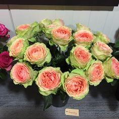 #Rose #Rosa #Gravity; Available at www.barenden.nl