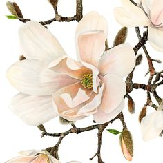I photographed this beautiful, calming Magnolia at the RHS gardens at Wisley. A perfect sign of Spring!
