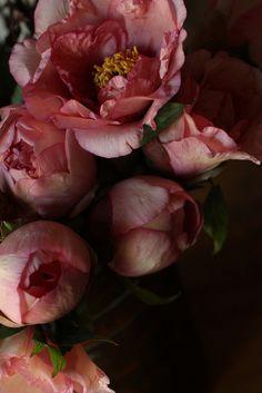 ❈ Fleurs Foncées ❈