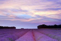 Provence lavender season from travel blogger World of Wanderlust.