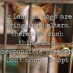 """""""As long as dogs are dying in shelters, there's no such thing as a responsible breeder. Don't shop - adopt."""""""