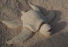 Tortue de sable , Chateau de sable