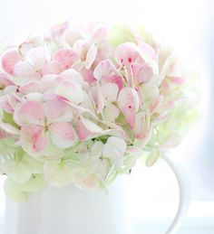 Joli hortensias