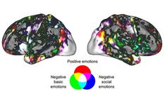 Love and Fear Are Visible Across the Brain, Not Restricted to One Region