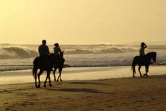 Ride horseback on a beach in the Caribbean Trail Riding, Horse Riding, Chincoteague Ponies, Beach Adventure, Romance Movies, Horseback Riding, Summer Of Love, Places To See, Monument Valley