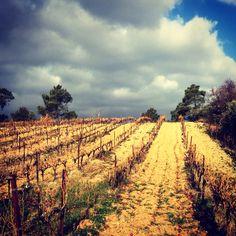 Vineyards in Rhone Valley, Cotes du Ventoux. Photo by Wine Tasting In Paris