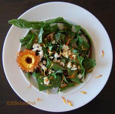 Goat Cheese Salad, Edible Plants, Buckets, Hunger Games, Food Dishes, Entrees, Spinach, Harvest, Dandelion