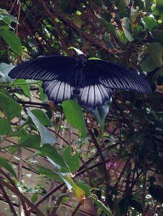 Butterfly (4) - Edmonton, Canada