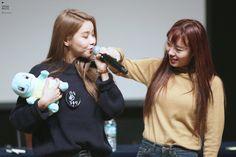 161111 강남 팬싸인회 솔라 휘인