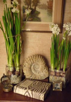 Paperwhites with ammonite, compass, I Married Adventure & Jay Strongwater frame.