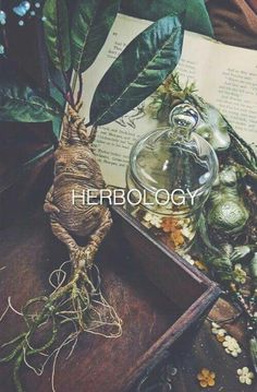 Learn more about herbology. Incenses, poultices, potions, tinctures.