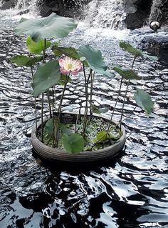 129 Best Bunga Teratai Images Beautiful Flowers Lotus Flower Nature
