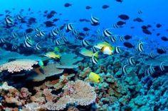 Blue Bay Snorkelling, Mauritius