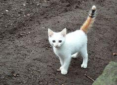 Look at that silleh tail! ( ͒ ु•·̫• ू ͒)