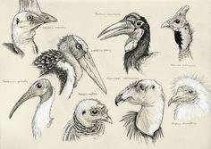 Ugly birds need love too by Eurwentala.deviantart.com on @deviantART
