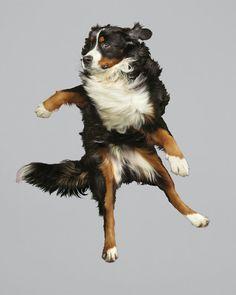 Designlov » Retratos hilários de cães saltando no ar