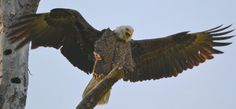 screaming eagle 8832 by jetskibrian