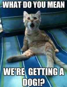 Funny Animal Pics With Quotes - Top 30 Funny Animal Memes And Quotes Funny Animal Quotes 25 Best Funny Animal Quotes And Funny Memes Quotes And Humor Funny Animal Quotes Cool Funny Q. Funny Animal Jokes, Funny Cat Memes, Cute Funny Animals, Funny Animal Pictures, Cute Baby Animals, Funny Dogs, Funniest Animals, Funny Humor, Cats Humor