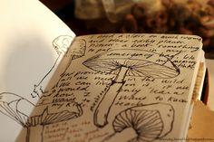 Sketchbook, art journal. nature journaling ideas for families - mushrooms 'rooms